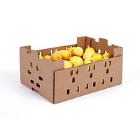 V50 Citrus Box